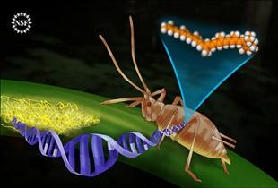 Animal DNA