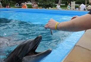 Ocean Dolphin